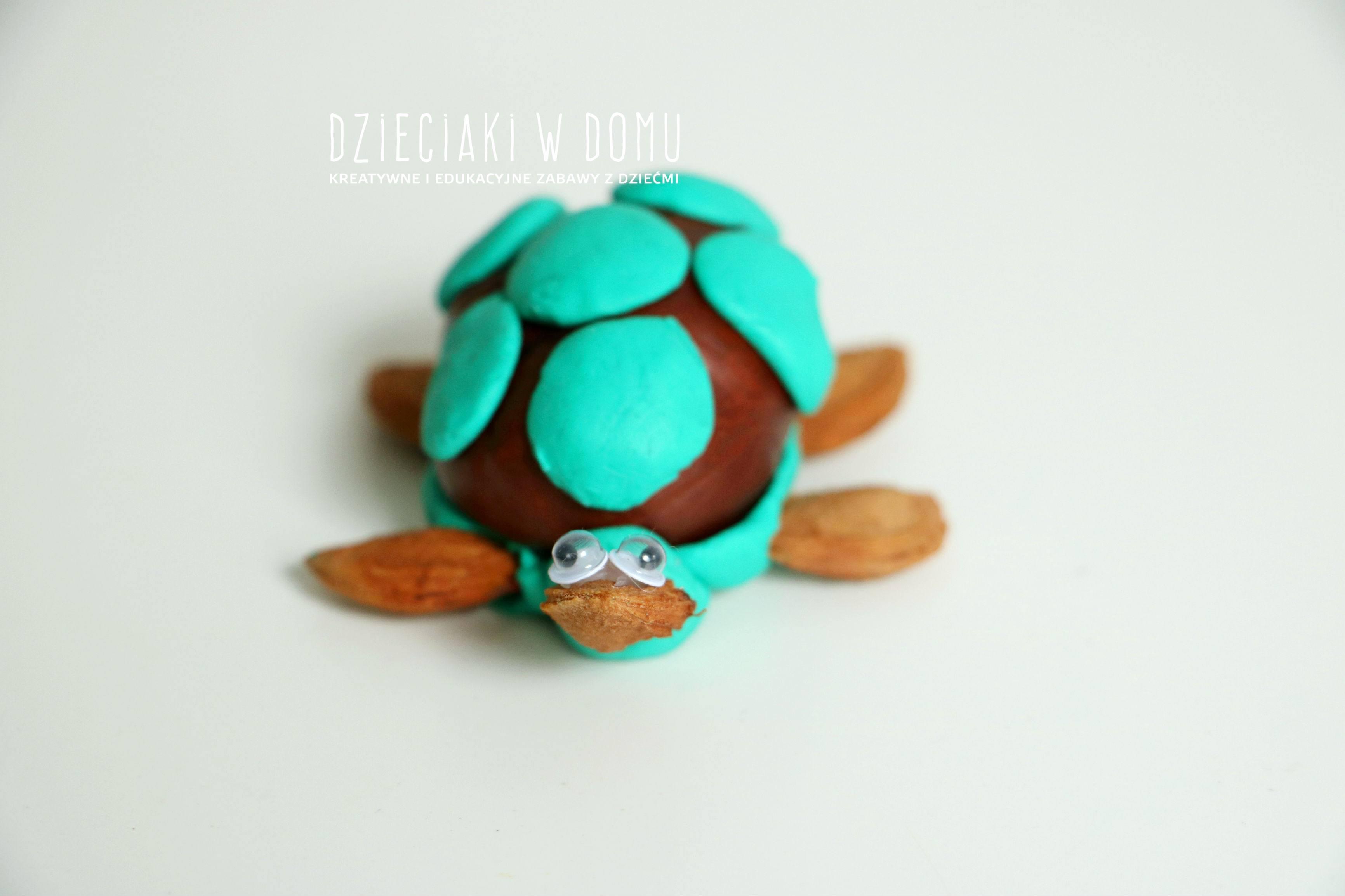 راز عمر بلند لاکپشت و عمر کوتاه مگس